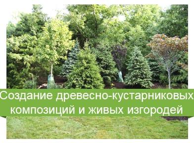 создание древесно-кустарниковых композиций и изгородей