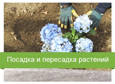 Посадка и пересадка растений